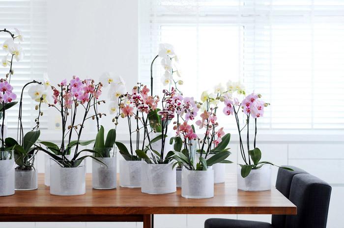 Стеклянные горшки для орхидей