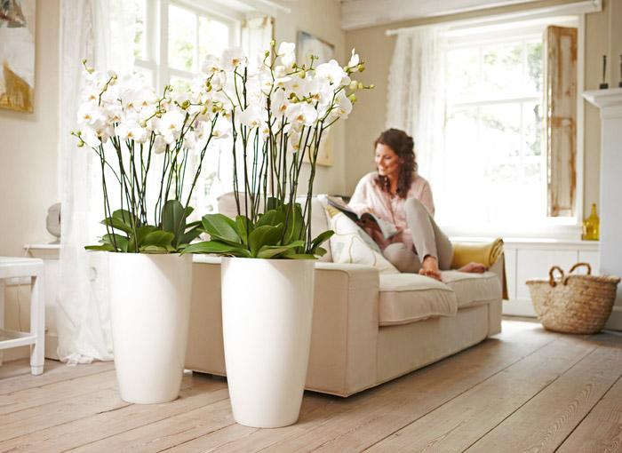 Пластиковый вазон для орхидей