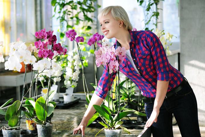 Соблюдайте режим полива, чтобы цветы хорошо себя чувствовали