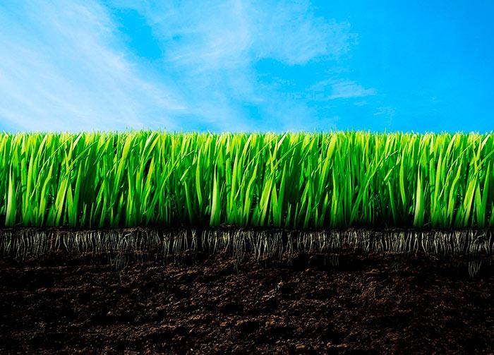 Хорошая газонная трава быстро отрастает после стрижки и сохраняет мягкость