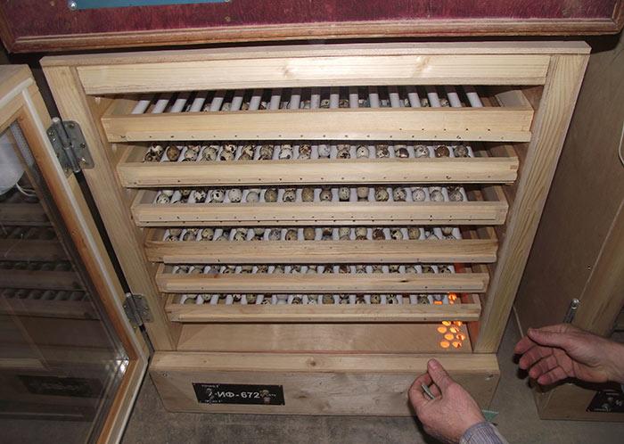 При выборе инкубатора рекомендуется обратить внимание на модели с автоматическим вращением яиц