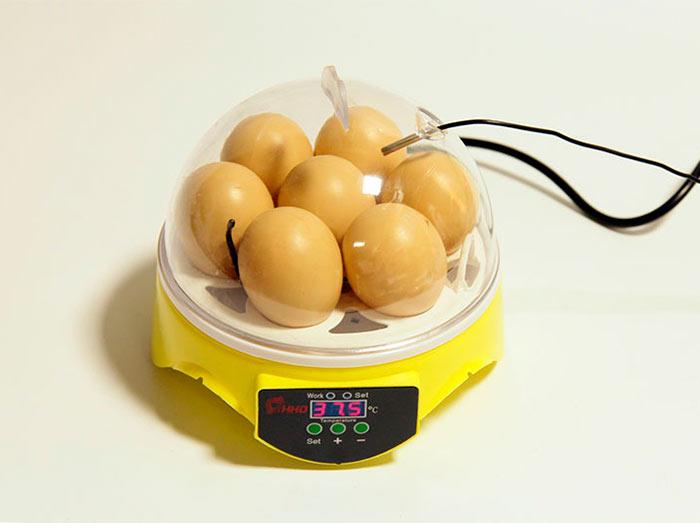 Для домашнего использования можно приобрести мини-инкубатор на несколько яиц