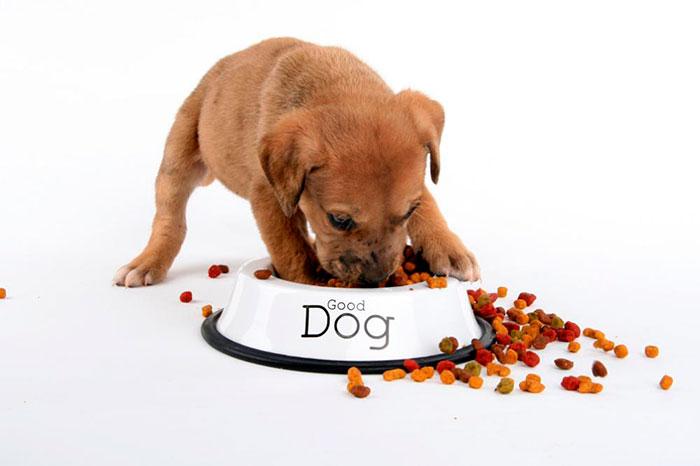 Корм необходимо приобретать в соответствии с возрастом собаки