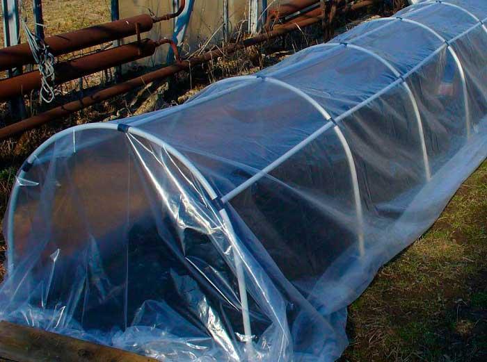 Полиэтиленовая пленка обеспечивает хорошую защиту от заморозков