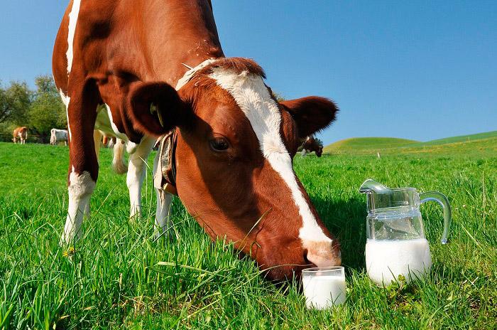 Цельное молоко подвергается минимальной обработке