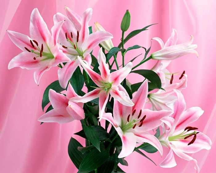 Зрелым женщинам лучше преподносить цветы красных, фиолетовых, желтых и розовых оттенков
