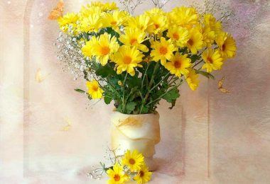 Выбираем хризантемы