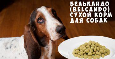 Белькандо (Belcando) сухой корм для собак
